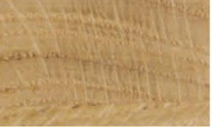 dąb szczotkowaty